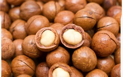 Macadamia Nuts Drying Technique