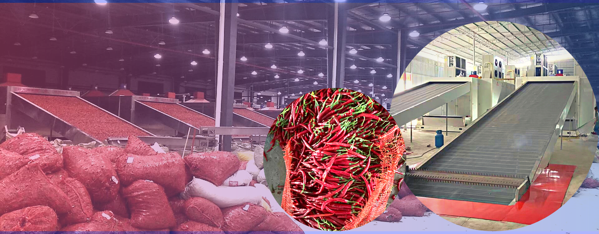Continuous Conveyor Belt vegetable drying machine