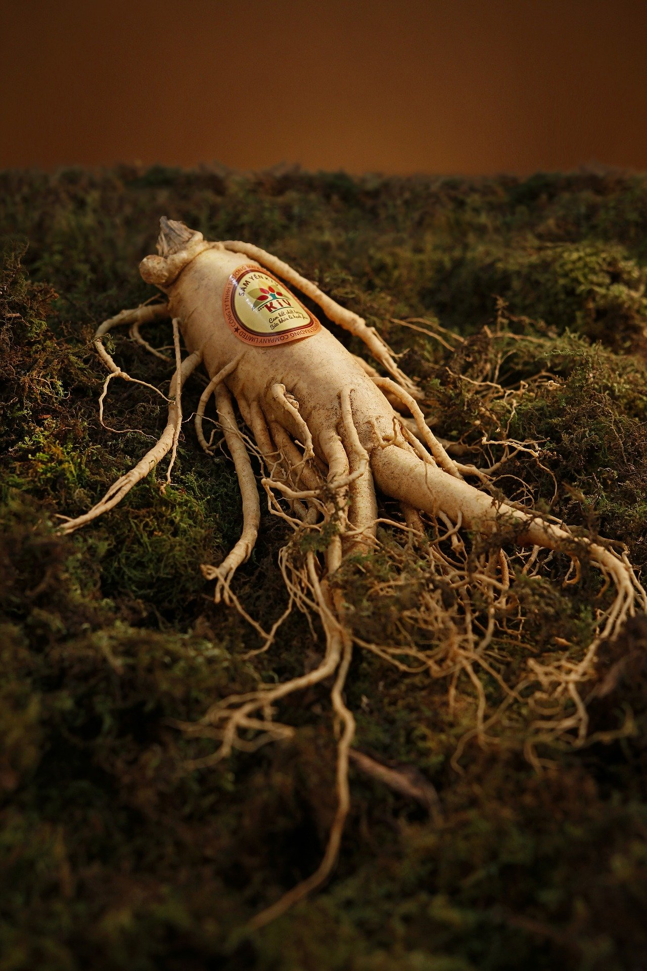 ginseng root also know as polygonatum, drying process
