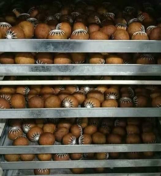 tangerine in the drying machine